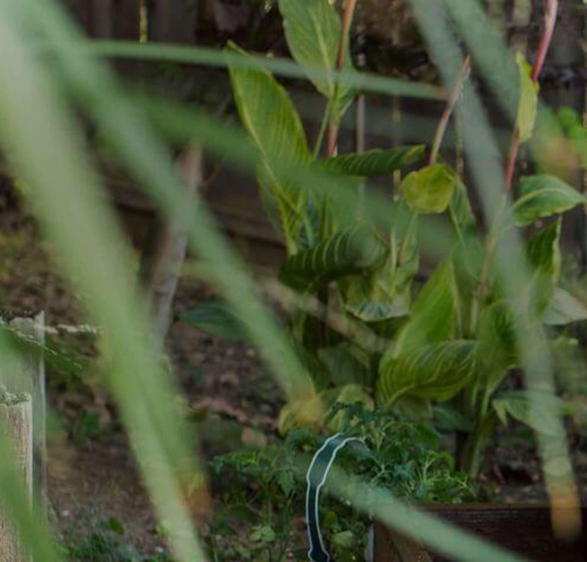 Una mujer haciendo jardinería con un niño.
